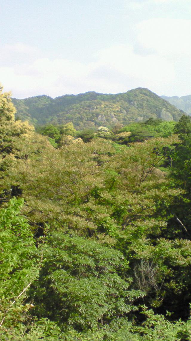 No 51  写真「羽黒山付近の新緑」