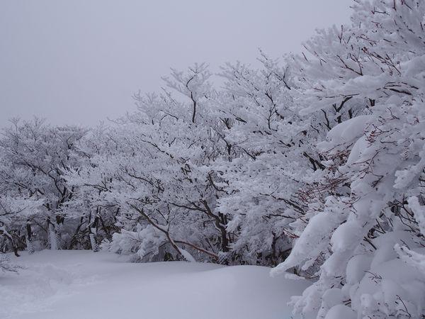 樹氷─御在所岳山頂