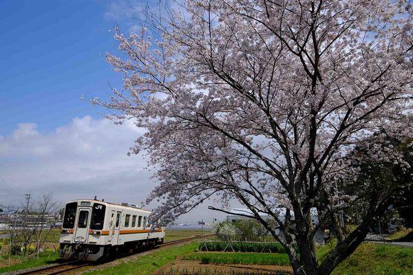 桜の花咲く名松線