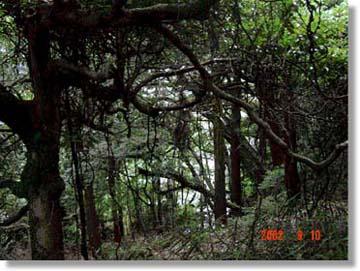 鈴鹿峠の古道