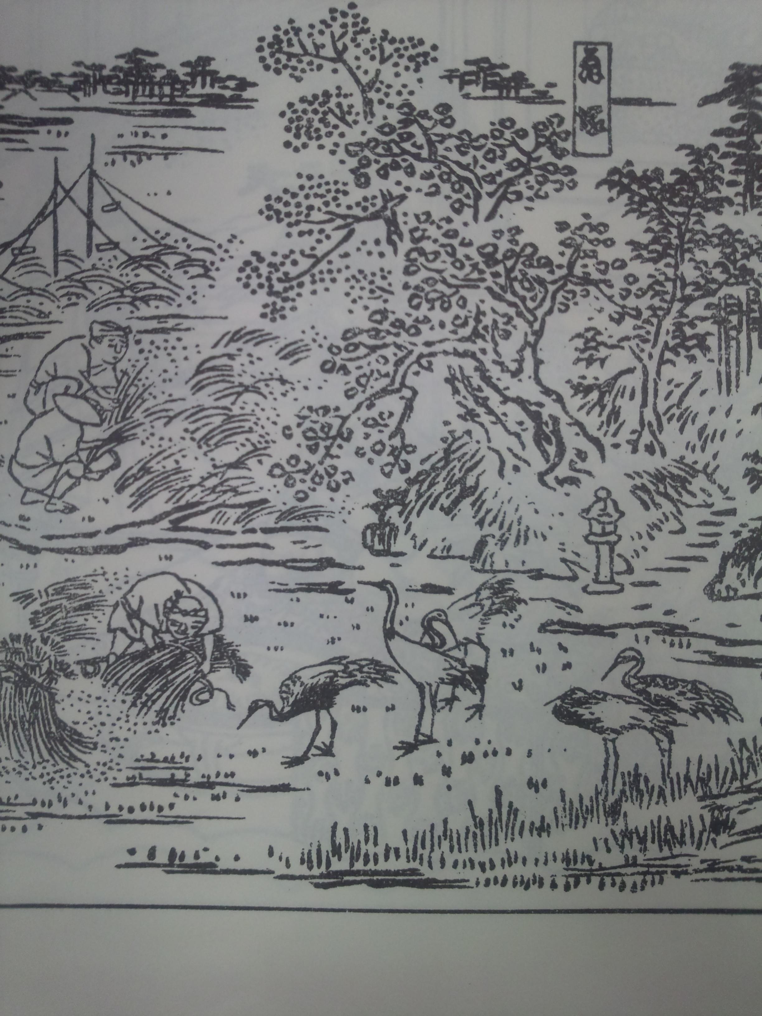 『伊勢参宮名所図会』に見られる大淀の鶴